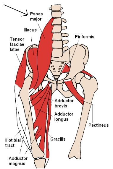 psoas anatomy pic